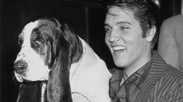 nothin-but-a-hound-dog